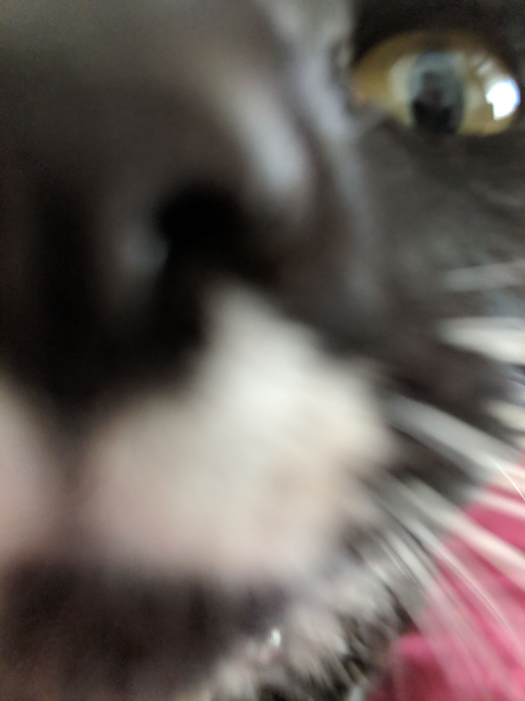 A blurry black and white cat, very close to the camera so that her nose is almost touching the lens.