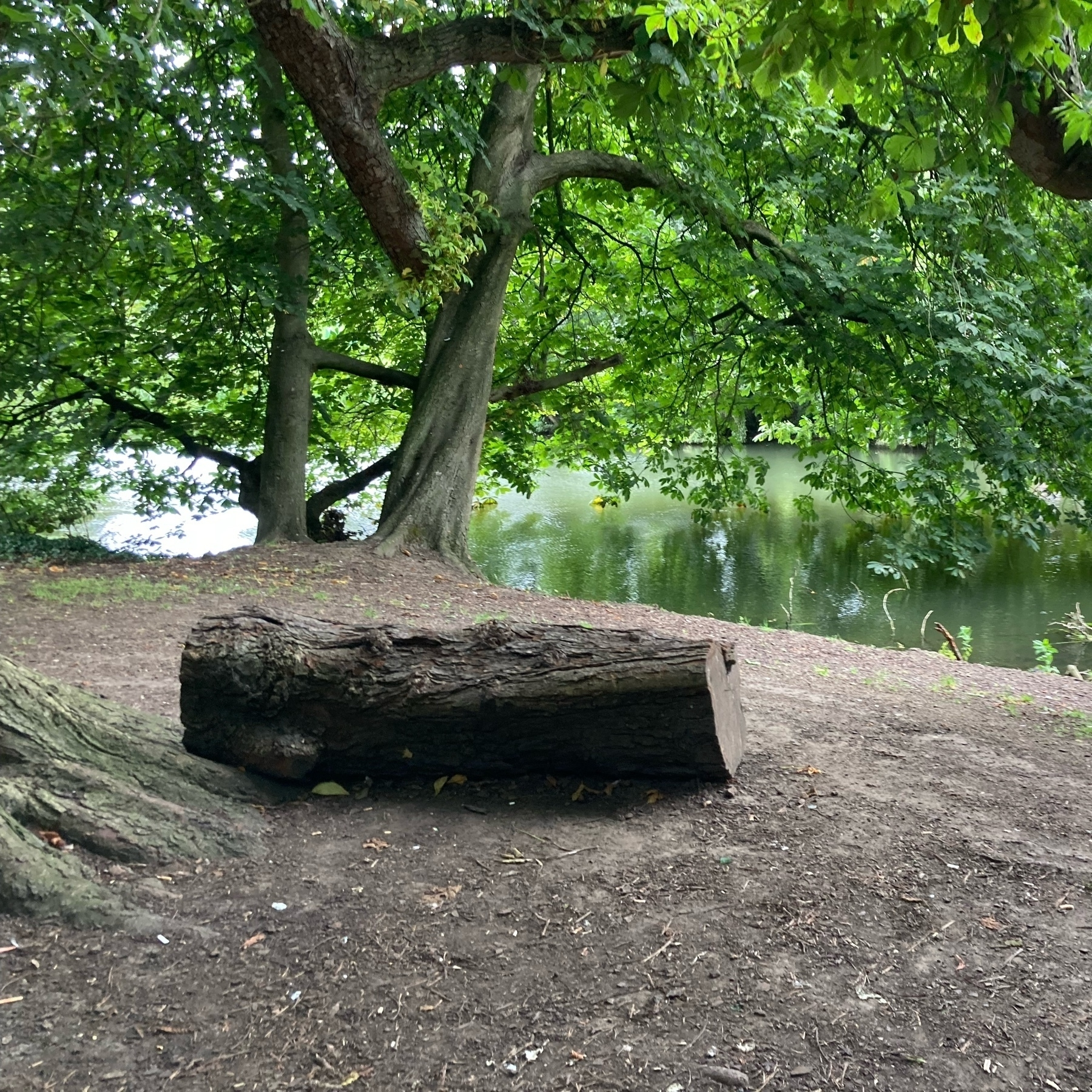 A log on the edge of a pond, surrounded by trees.