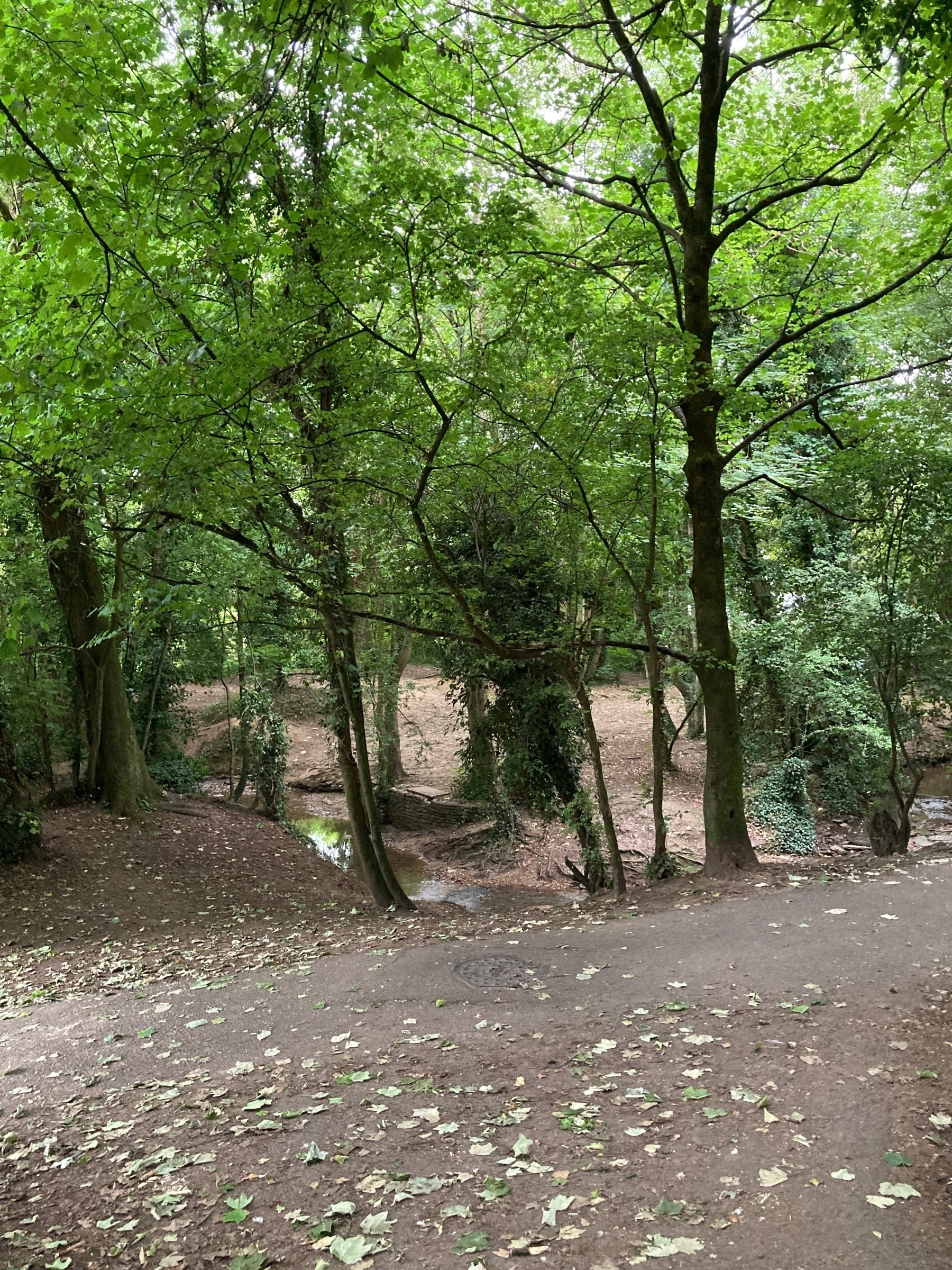 A wooded area, with a stream and natural footpaths.